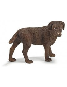 Cadela Labrador
